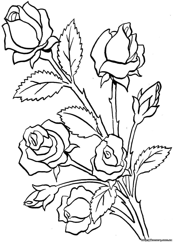 Dibujos Flores Rosas P Gif Rosa Muscosa Alba Dibujo Jpg