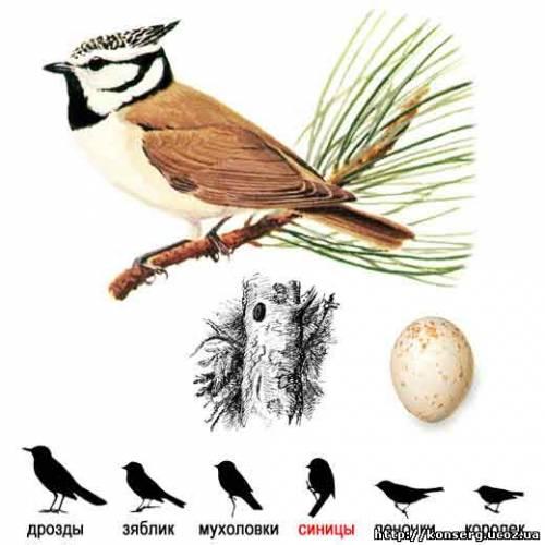 Товары для птиц интернет магазин